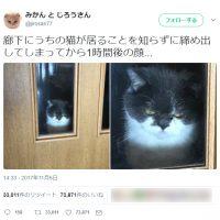 締め出されてしょんぼり?な猫さんの表情に…思わず謝ってしまう