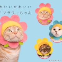 猫の被り物カプセルトイ第15弾!『ねこフラワーちゃん』限定販…