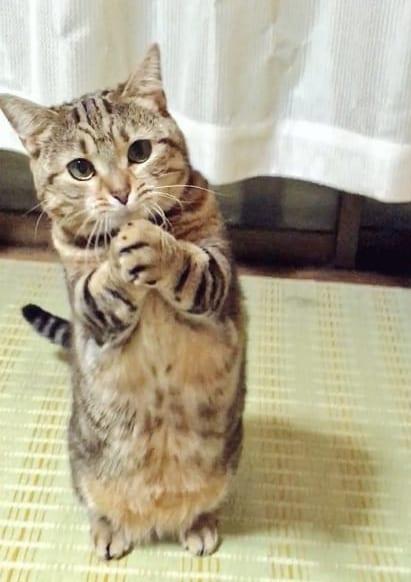 「ちゅ~る かって?おねがい」 まるでおねだりしているような猫が話題
