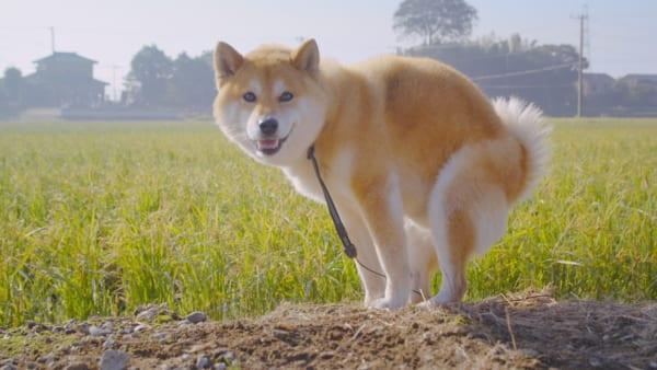 「犬は排便をする際、南か北を向く」は本当?タケダが調査