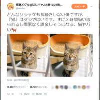 際限なく課金しそうになる。『猫』はマジやばい生き物?!
