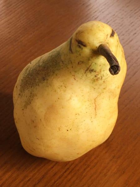 ひよこ洋ナシ?怒った顔にみえる西洋梨が何だかカワイイ