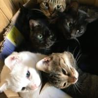 ダンボール箱は猫ほいほい……うっかり猫部屋に置き忘れた結果