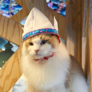 にゃーん。キュートな猫用コスプレ雑貨『necos』第2弾は世界旅行がテーマ