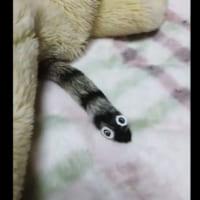 猫の尻尾がチンアナゴに大変身!目から鱗の簡単仮装