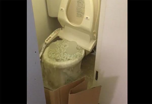 猫砂が原因と思しきトイレの惨劇にネット民悲鳴!猫砂は流さないで!