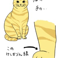 猫の足は「けしかライン」でできている……かわいすぎて全てがケ…