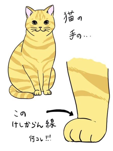 猫の足は「けしかライン」でできている……かわいすぎて全てがケシカラン!
