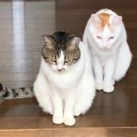 『姐さんお気を付けなすって』って言っている?猫二匹のワル顔…