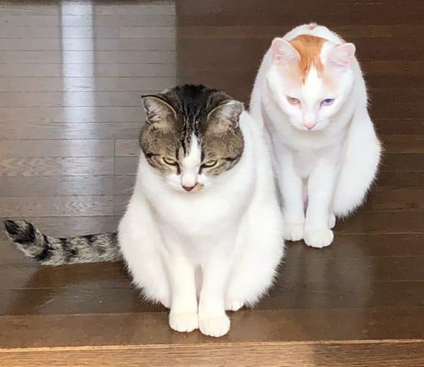 『姐さんお気を付けなすって』って言っている?猫二匹のワル顔が話題
