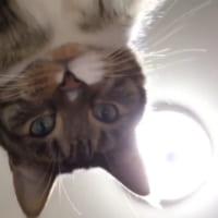 くる、くる。何で回してるの? 自撮り猫ちゃんまさかのカメラ…