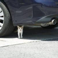 猫が車に入り込むトラブル知ってる?乗車の前には必ず「ボンネ…