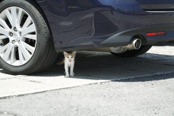 猫が車に入り込むトラブル知ってる?乗車の前には必ず「ボンネットパンパン」