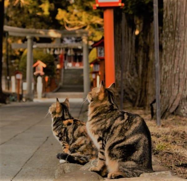 イーハトーブの里に祀られる猫の御祭神。オトラサマと民話の郷の遠野郷八幡宮