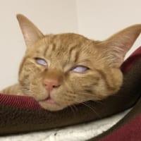 完全白目な衝撃の寝顔!猫の寝顔って……