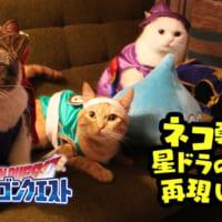 猫の勇者が活躍する「星のドラゴンクエスト」動画がニャンとも…