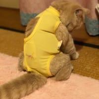 試合に負けた感出てる猫 術後服着た後ろ姿が完全に哀愁漂わせてる