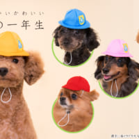 ともだち100人でっきるっかなっ 犬用被り物シリーズに「犬の…