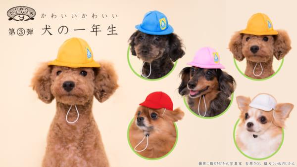 ともだち100人でっきるっかなっ 犬用被り物シリーズに「犬の一年生」