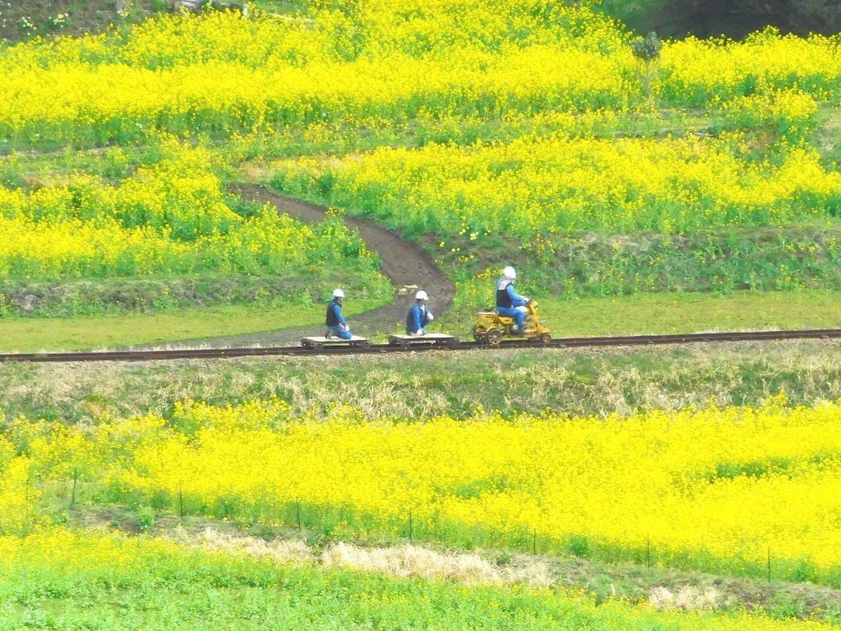 菜の花畑の線路に現れた謎の乗り物 汽車でもトロッコでもないそれは……