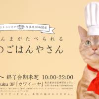 スペシャル猫まんまが食べられる「ねこのごはんやさん」、原宿で…