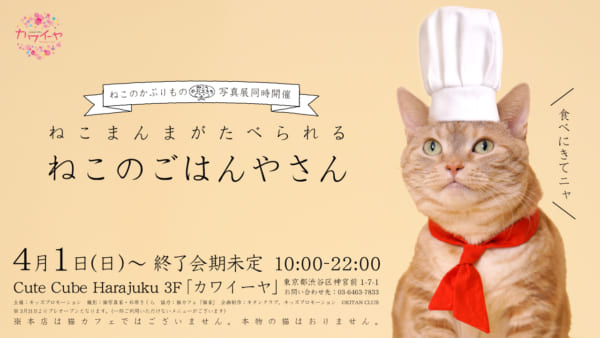 スペシャル猫まんまが食べられる「ねこのごはんやさん」、原宿で開幕!!