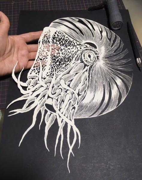 切り絵作品なのに3D感すごい!平面なオウムガイの切り絵が立体的すぎて感嘆!