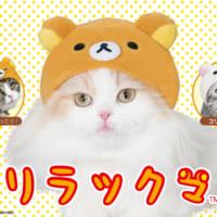 リラックマ×リアル猫=可愛いくて悶絶必至!猫の被り物シリーズ…