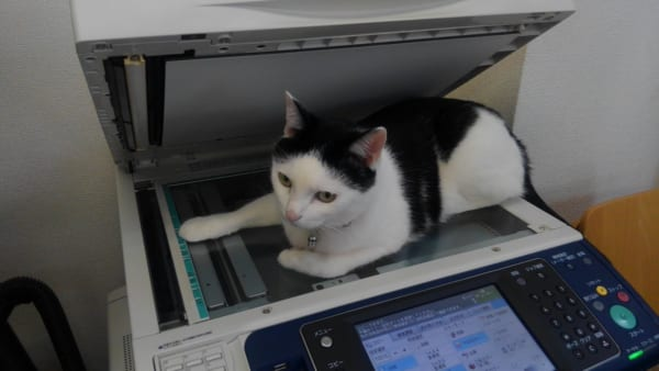可愛い顔してシレっといたずら 猫と働く企業の日常が楽しすぎる