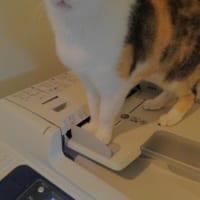 可愛い顔してシレっといたずら 猫と働く企業の日常…