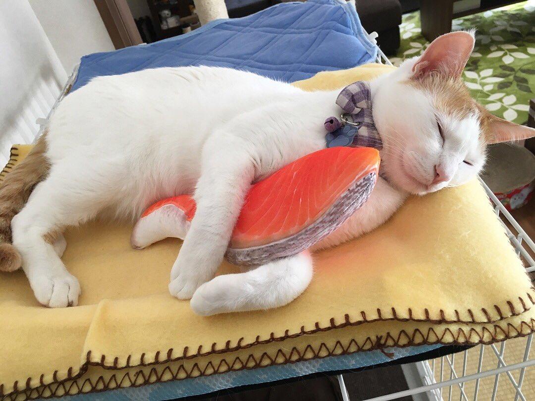 どんな夢を見ているのかな?鮭の切り身大好きな猫ちゃんの寝姿が超キュート