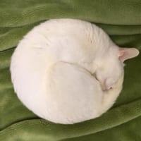 満月でしょうか?いいえ、猫です。コンパスで描いた様なニャンモ…