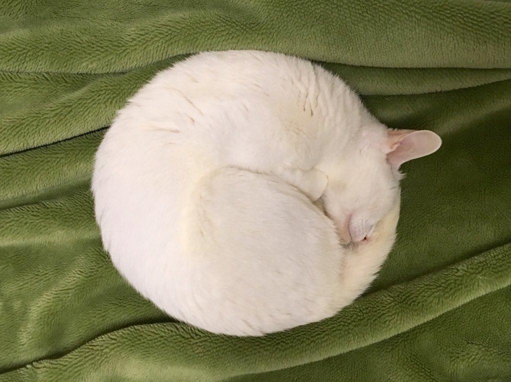 満月でしょうか?いいえ、猫です。コンパスで描いた様なニャンモナイト、発見