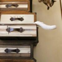 引き出しを開けたら……ニャンとも楽しい家具が来て、猫たち大…