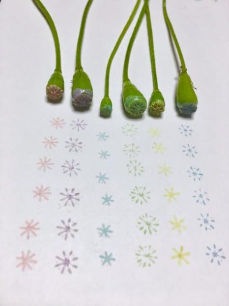 可愛い花は実も可愛い?ナガミヒナゲシの実鞘でスタンプ遊びしながら雑草対策