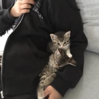 揃って子猫がスヤァ……パパの腕の中が大好きな子猫たちが可愛すぎて悶絶