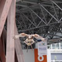 金沢駅の美しさを守る「鷹パトロール」がスゴ過ぎる!