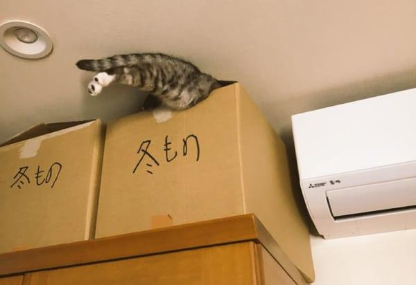 猫もそろそろ衣替え?自ら収納されていくスタイルの猫に「これって冬物??」の声多数