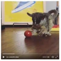 ボール遊びたのし……え?これミニトマト!!な表情のブッシュ…