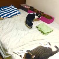 人にもベッドで休む権利を!!猫に占拠された時に有…