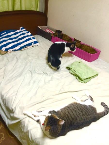 人にもベッドで休む権利を!!猫に占拠された時に有効な「区画整理事業」