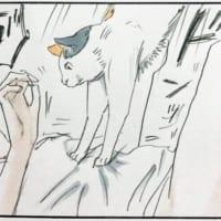 猫飼いあるあるに共感 不意打ちの「ドンッ!」に悶絶