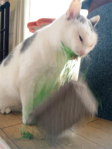 パワー系草食猫!荒ぶりまくった猫草の食べっぷりが話題 ぐわっしゃあああああ