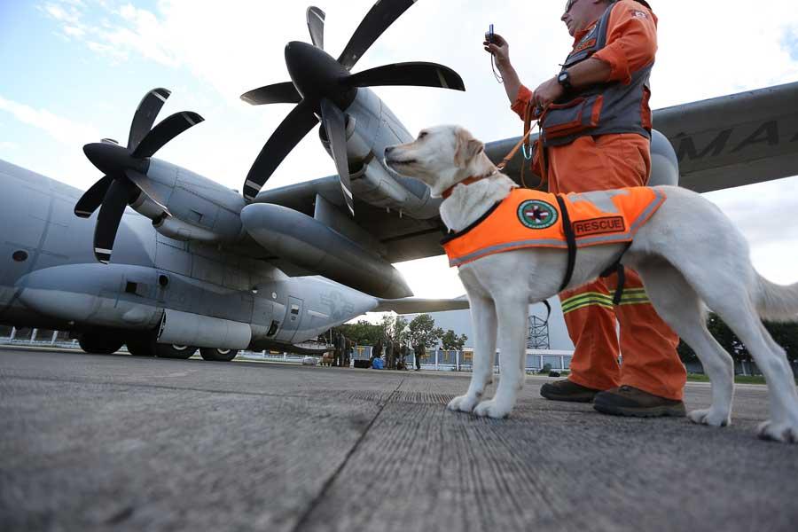 カナダの救助犬