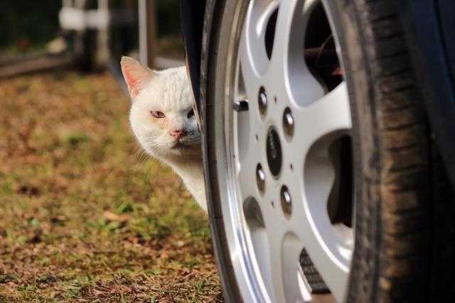 猫の秘密結社「NNN」メンバーの仕業か?猫はヒト語を理解しているかもと話題