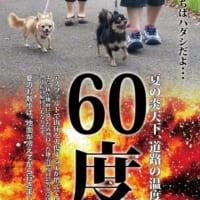 灼熱のアスファルトの上をはだしで歩けますか?炎天下での犬の…