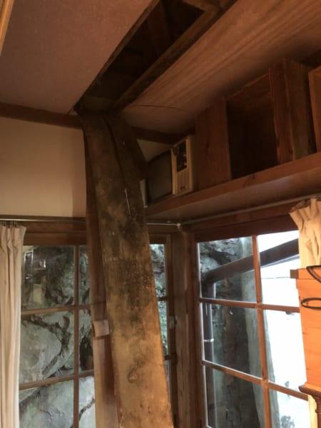 天井裏からハクビシンが降ってきた!大迷惑の害獣夫婦に猫もおかんむり