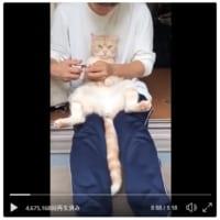 羨ましい……猫飼いなら皆憧れる「おとなしく爪を切られる猫」