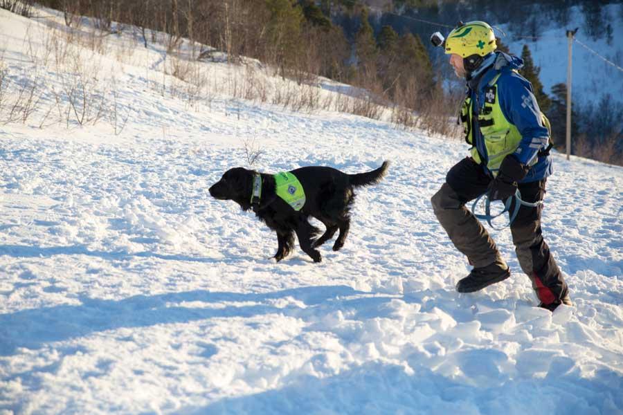 ノルウェーの雪崩救助犬