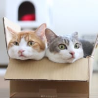 振り向けば、みっちり。 箱入りなニャンコたちが仲良しすぎて萌…